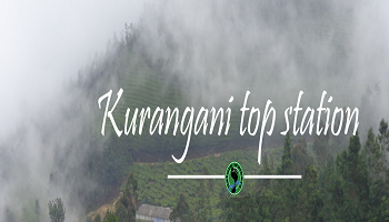 Kurangani Top Station Bird Watching Trek (12-14th Oct)