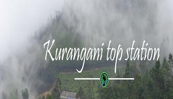 Kurangani Top Station Bird Watching Trek (26-28th Oct)