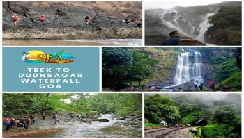 Dudhsagar Waterfall Trip in Goa (1 day)