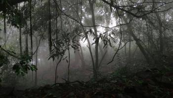 Andharban and Devkund Waterfalls,  The Mysterious Dense Forest