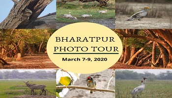 Bharatpur Photo Tour