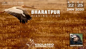 BHARATPUR BIRD PHOTOGRAPHY TOUR