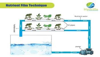 Aquaponics and Hydroponics Workshop