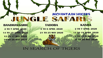 Bandhavgarh Jungle Safaris
