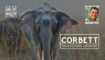 CORBETT PHOTO EXPEDITION- AVISHEK ROY