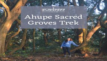 Ahupe Sacred Groves Trek